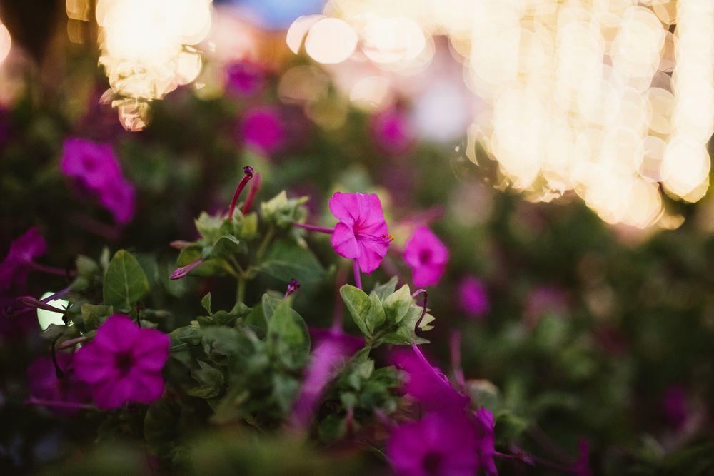 garden wedding dubrovnik_dt studio_40