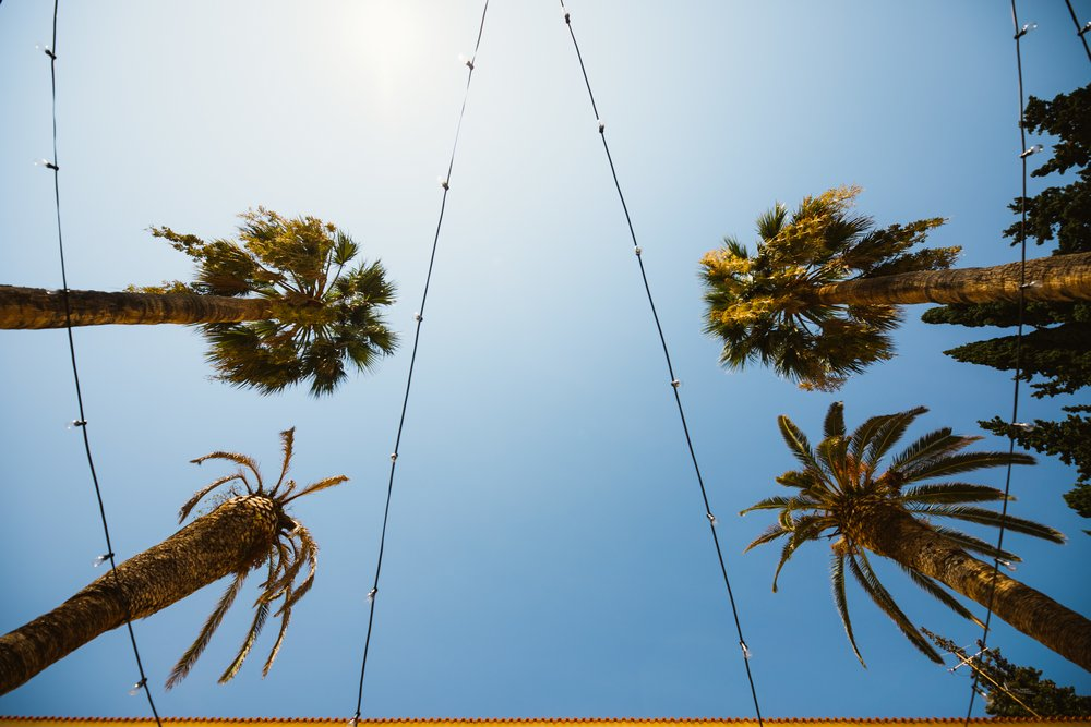 palm trees at Villa Dalmacija Wedding Venue in Split, Croatia